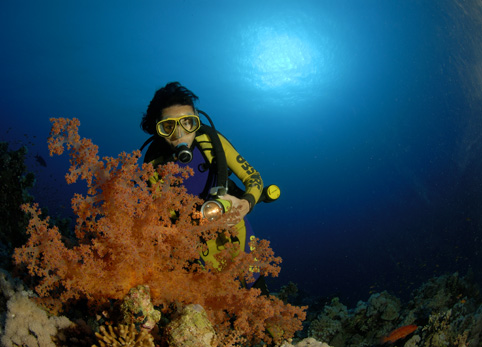 soft coral in red sea